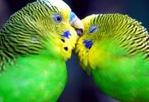 Beautiful Couple Birds - Beautiful Couple Birds