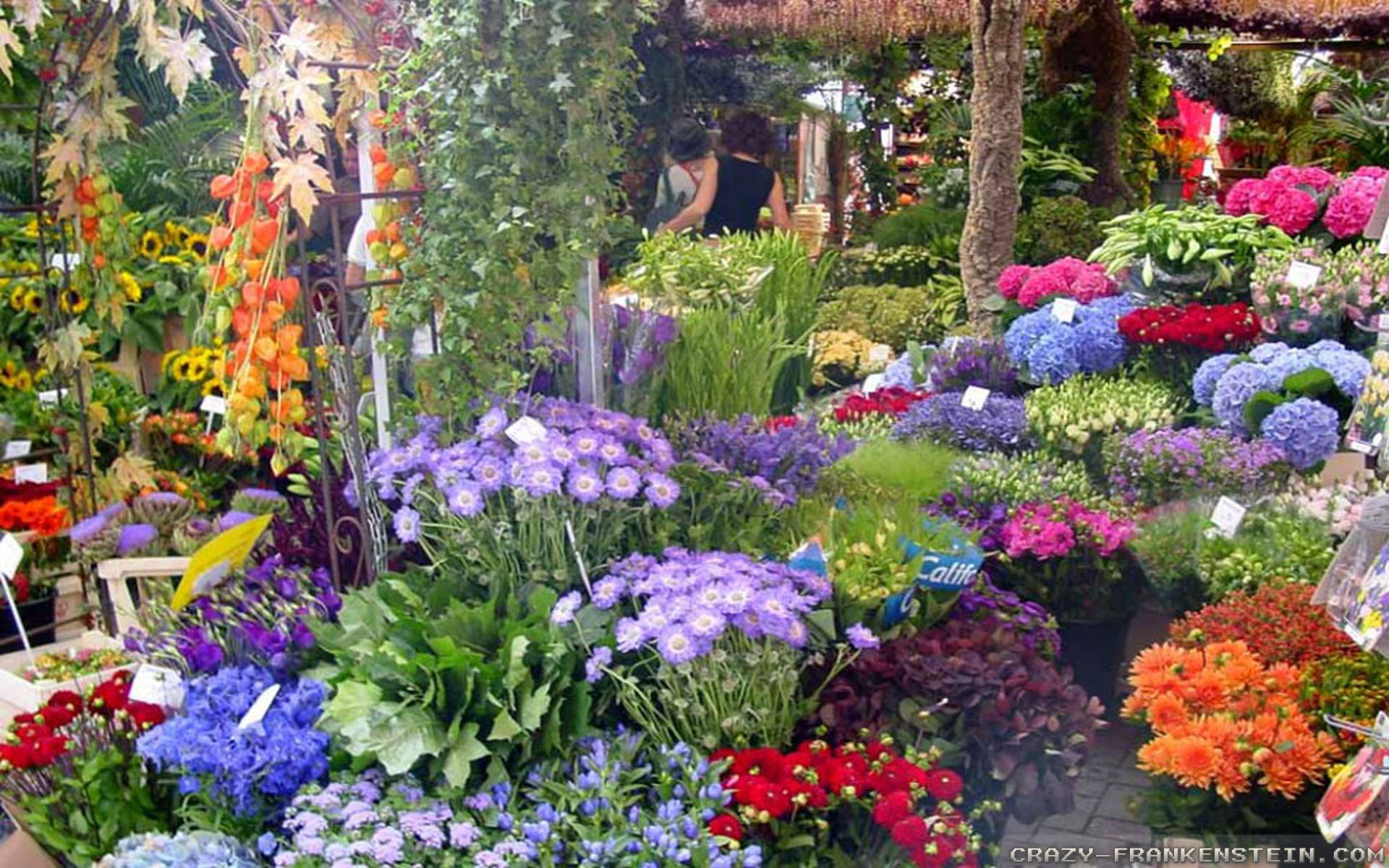 Beautiful Flower Garden - Beautiful Flower Garden