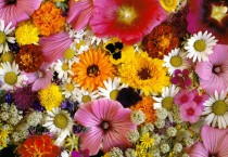 Beautiful Flowers Wallpaper - Beautiful Flowers Wallpaper