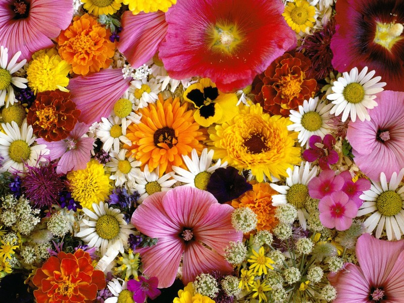 Beautiful Flowers Wallpaper - Beautiful Flowers Wallpaper