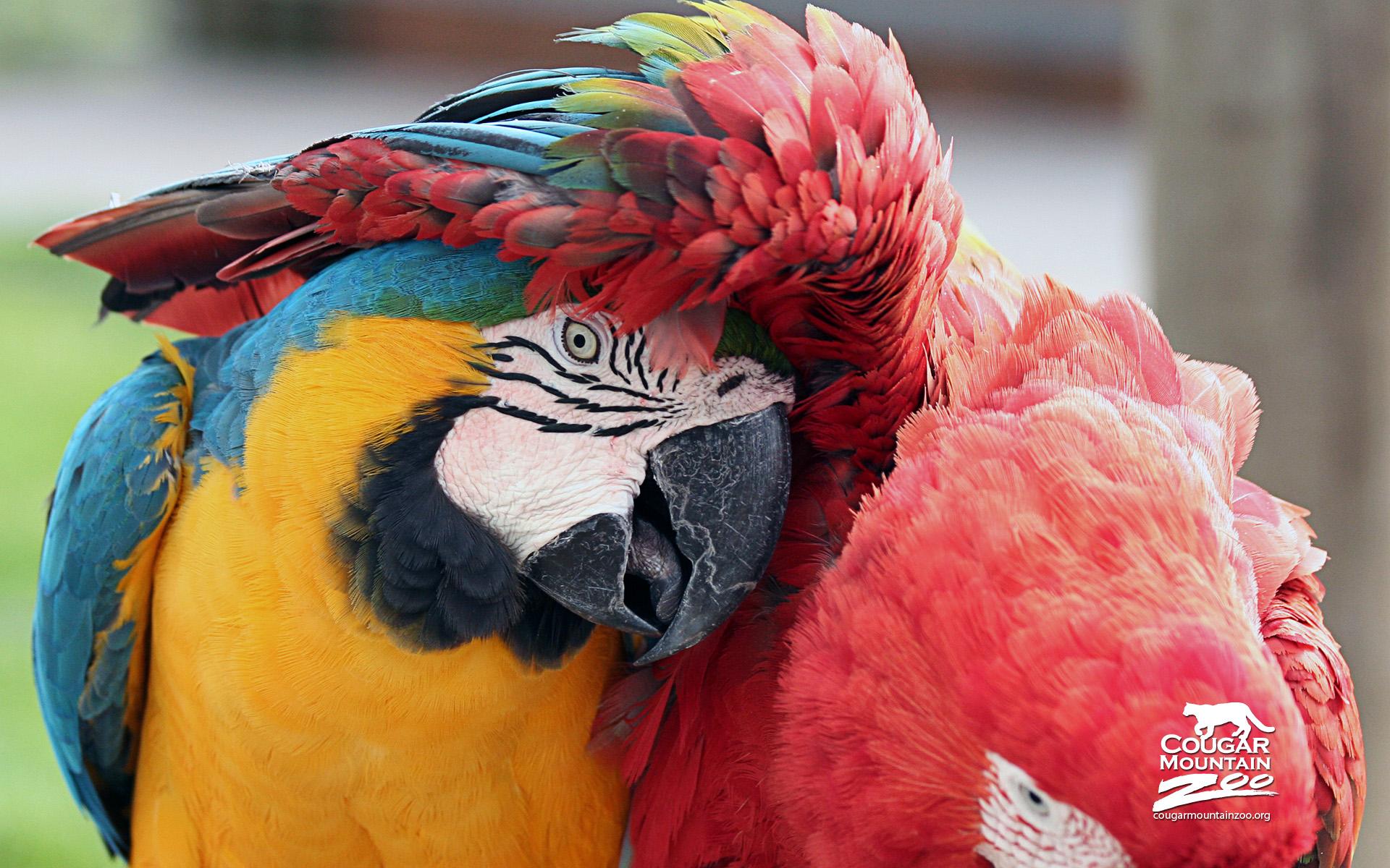 Beautiful Macaws - Beautiful Macaws