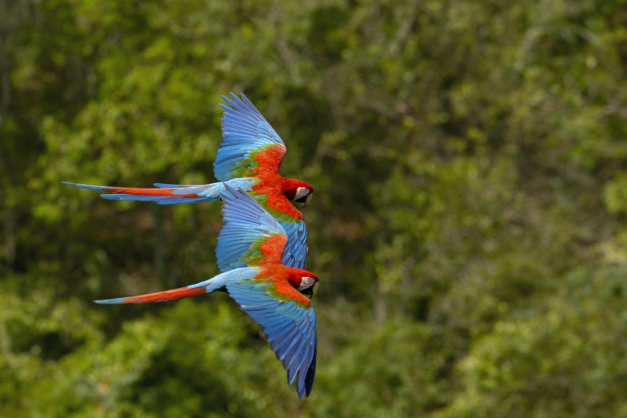 Beautiful Parrot Birds - Beautiful Parrot Birds
