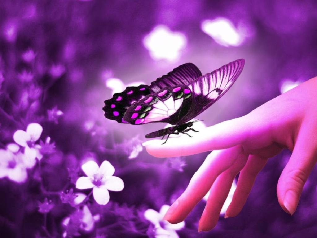 Beautiful Purple Butterfly - Beautiful Purple Butterfly