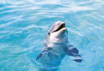 Cute Dolphin Wallpaper - Cute Dolphin Wallpaper