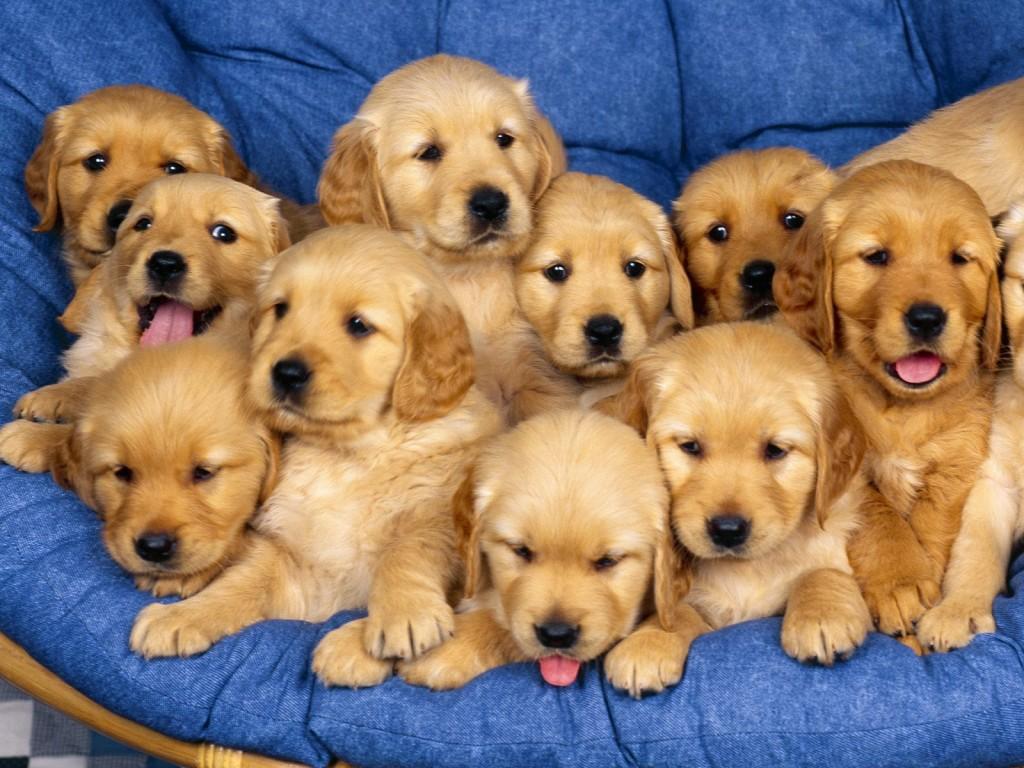 Cute Puppies Wallpaper - Cute Puppies Wallpaper