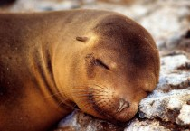 Cute Seal Wallpaper - Cute Seal Wallpaper