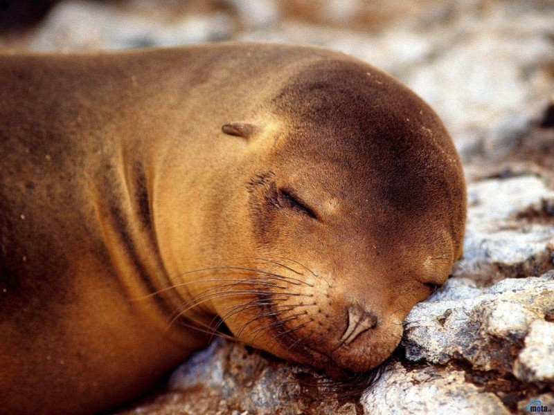 Cute Seal Wallpaper - Cute Seal Wallpaper