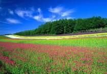 Flowers Field - Flowers Field