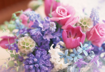 Flowers Pastel Colours - Flowers Pastel Colours