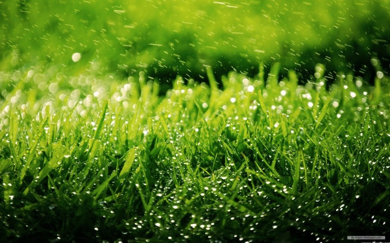 Green Grace Dew Wallpaper - Green Grace Dew Wallpaper