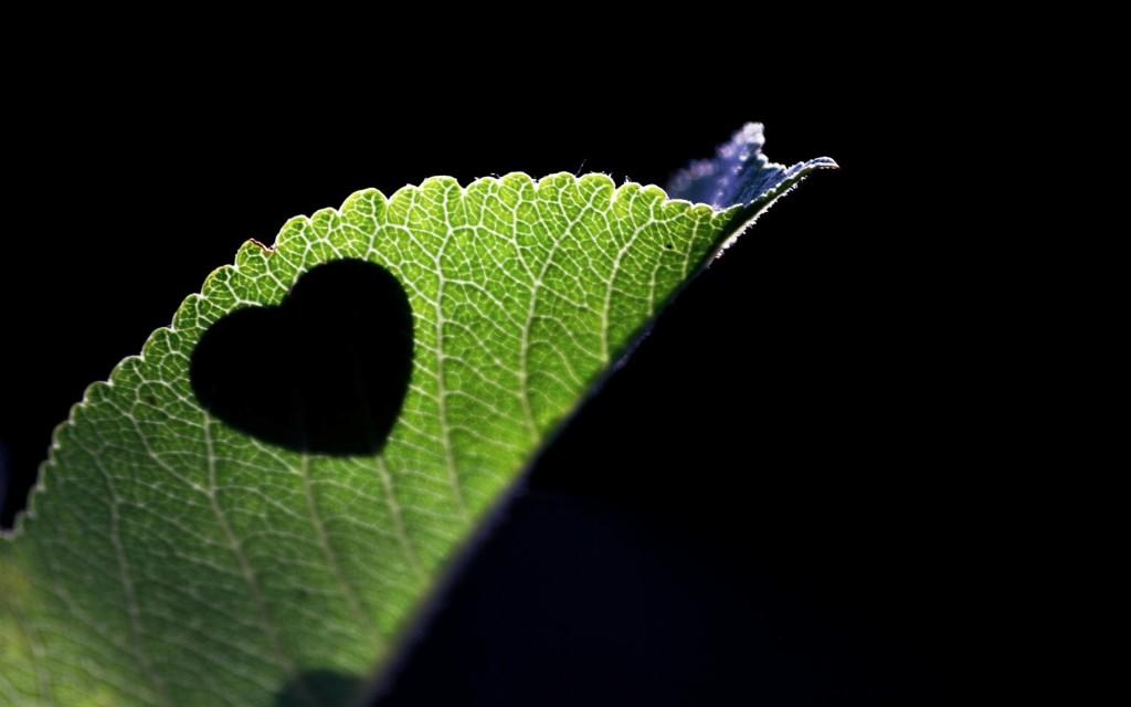 Heart Shaped Of Leaves - Heart Shaped Of Leaves
