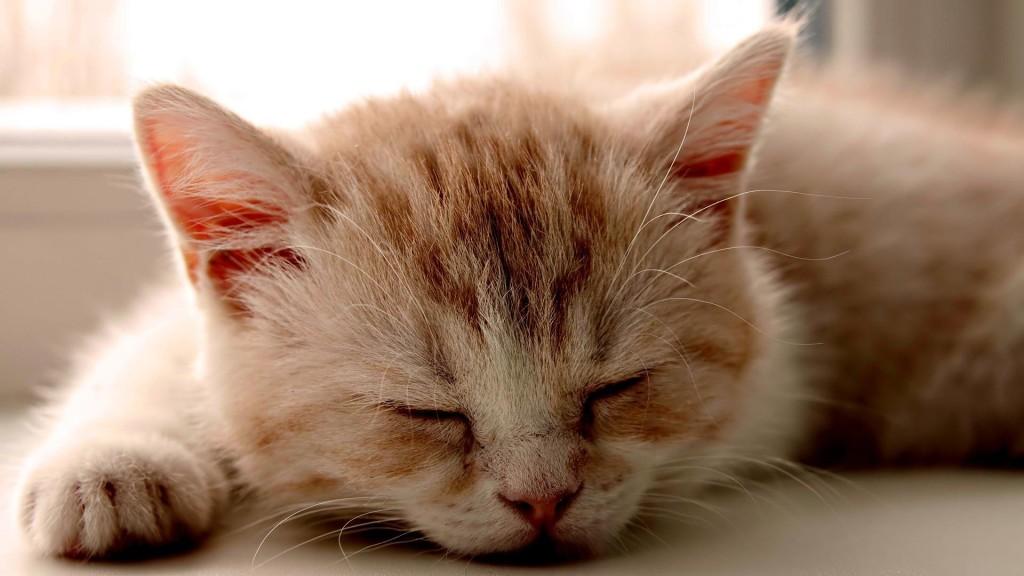 Kitten Sleeping Images - Kitten Sleeping Images