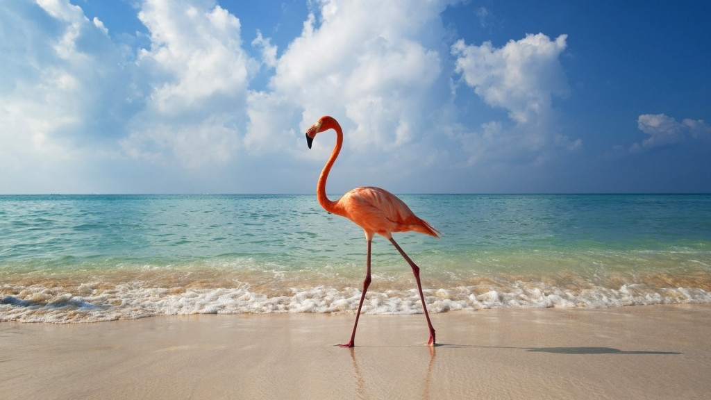 Pink Flamingo Photos - Pink Flamingo Photos