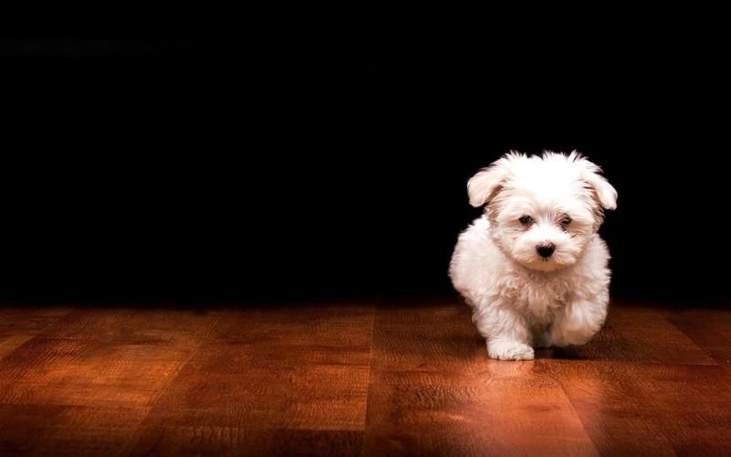 Puppy Walking In The Floor - Puppy Walking In The Floor