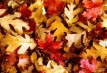 Autumn Fall Wallpaper - Autumn Fall Wallpaper