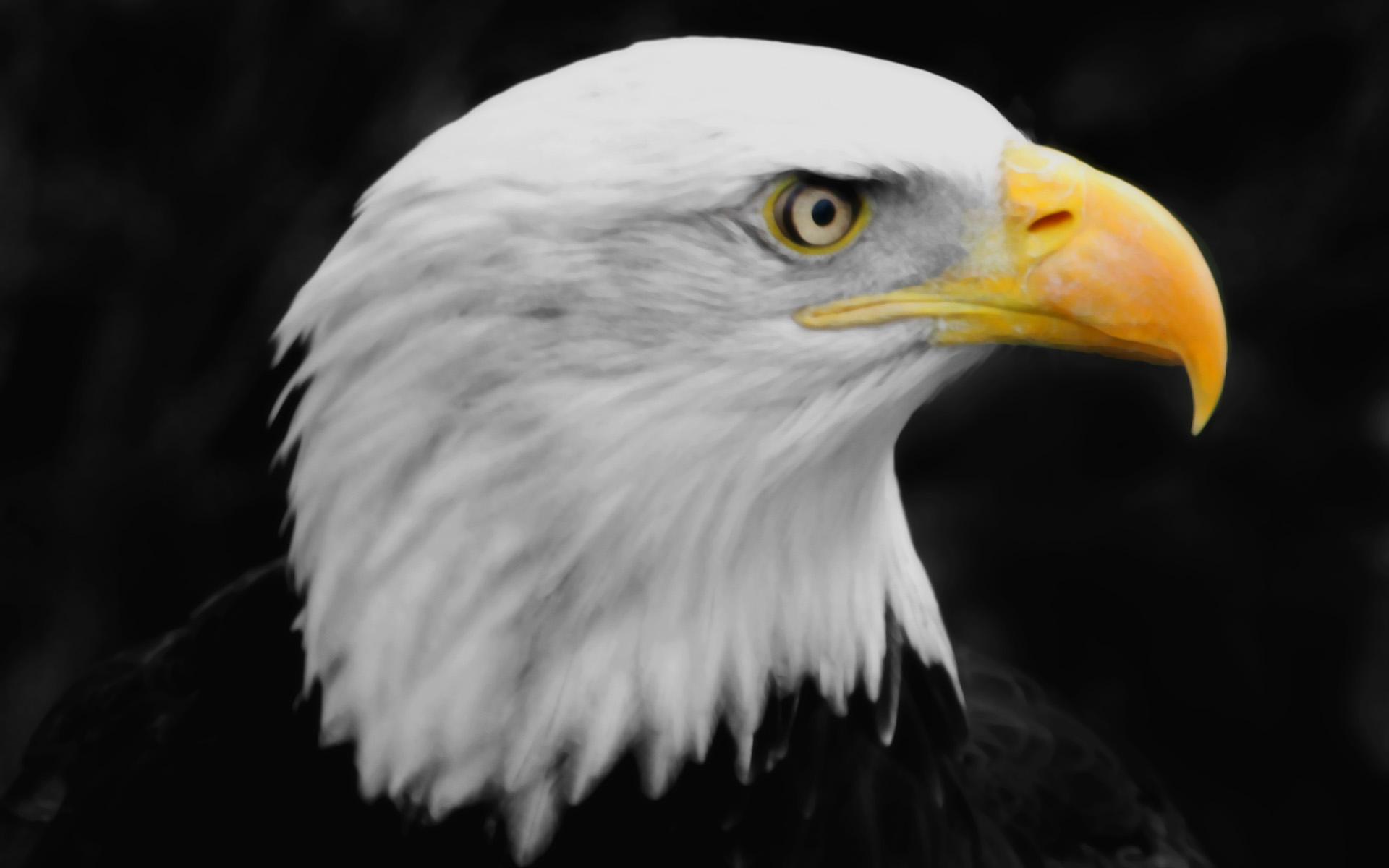 Beautiful Eagle Photos - Beautiful Eagle Photos