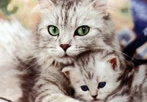 Beautiful Kitten Wallpaper - Beautiful Kitten Wallpaper