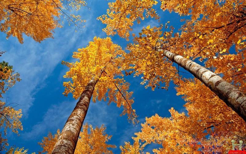 Golden Leaves Trees - Golden Leaves Trees
