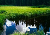 Green Grass Landscape - Green Grass Landscape
