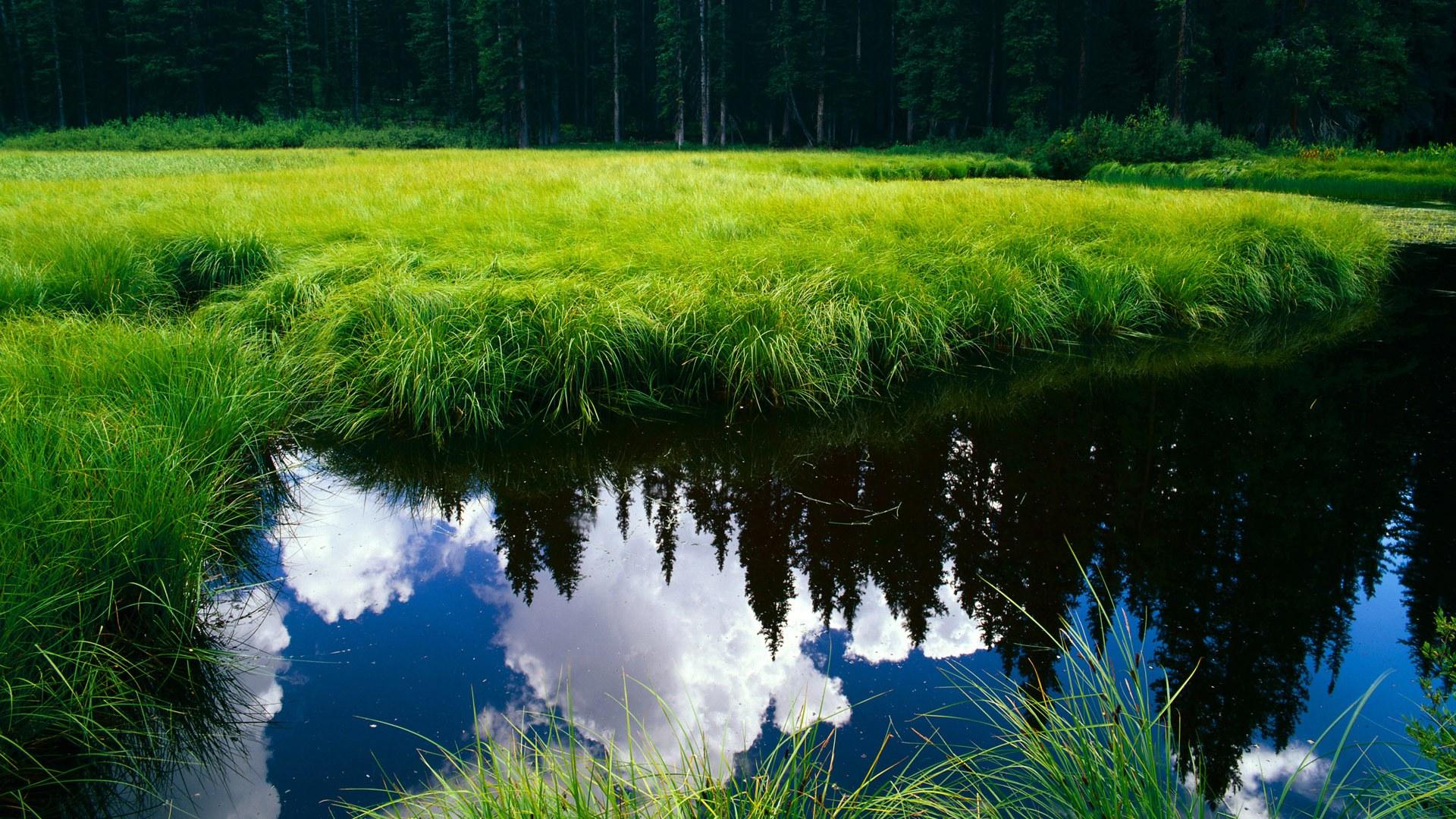Green Grass Landscape - Green Grass Landscape