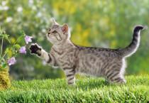 Kitten Playing Flowers - Kitten Playing Flowers