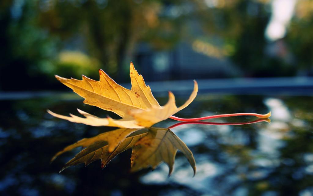 Natural Leaf Photos - Natural Leaf Photos