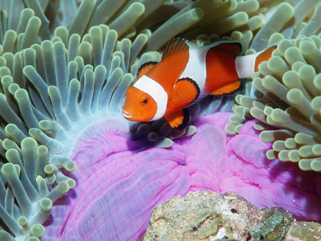 Nemo In The Deep Sea - Nemo In The Deep Sea