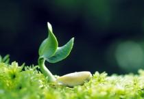 Plants Grow Up - Plants Grow Up