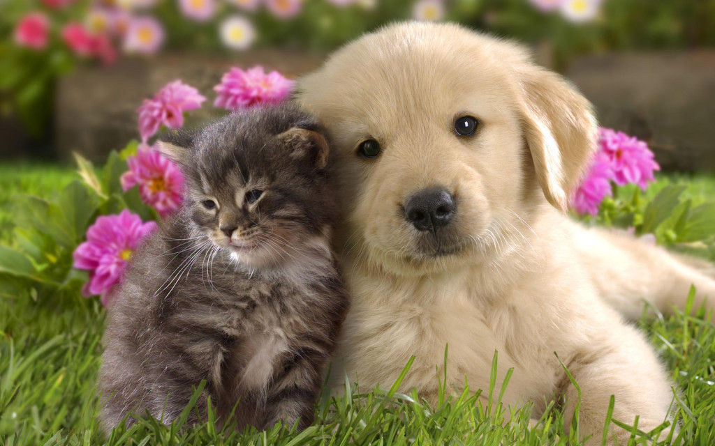 Puppy With Kittens - Puppy With Kittens