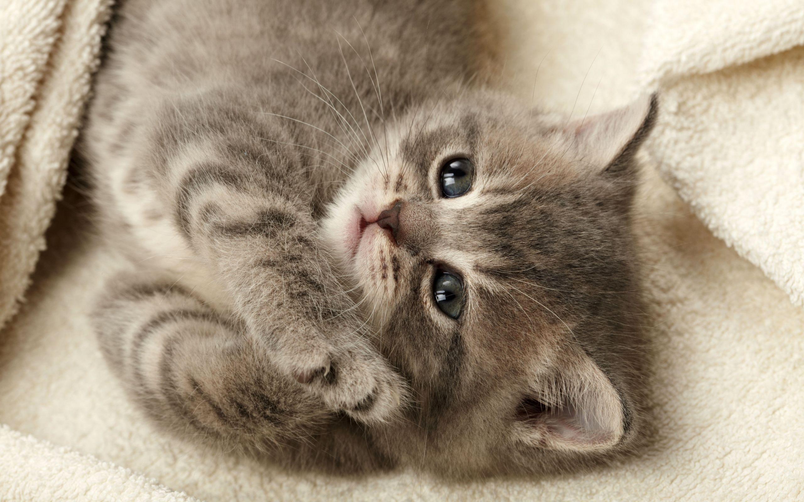 Sleepy Smoky Kitten Eyes - Sleepy Smoky Kitten Eyes