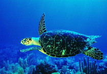 Turtle Deep Sea - Turtle Deep Sea