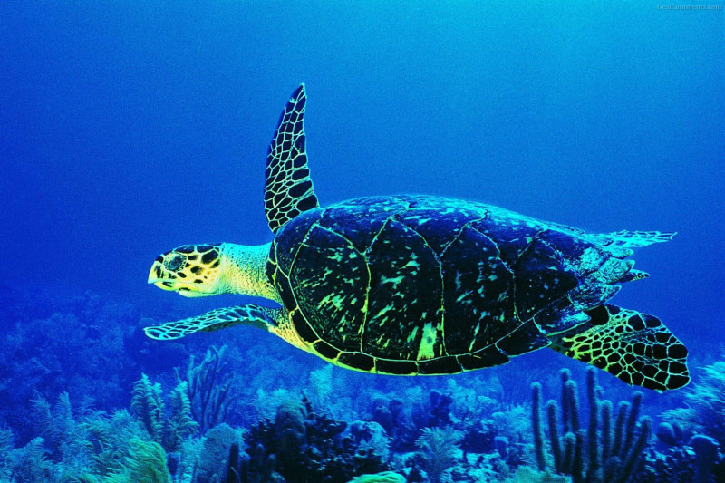 Turtle Deep Sea - Turtle Deep Sea