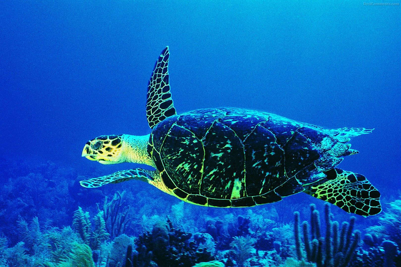 Turtle Deep Sea Water