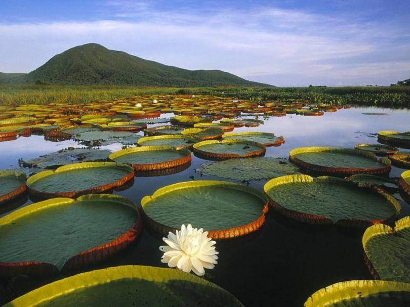 Beautiful Brazil River - Beautiful Brazil River