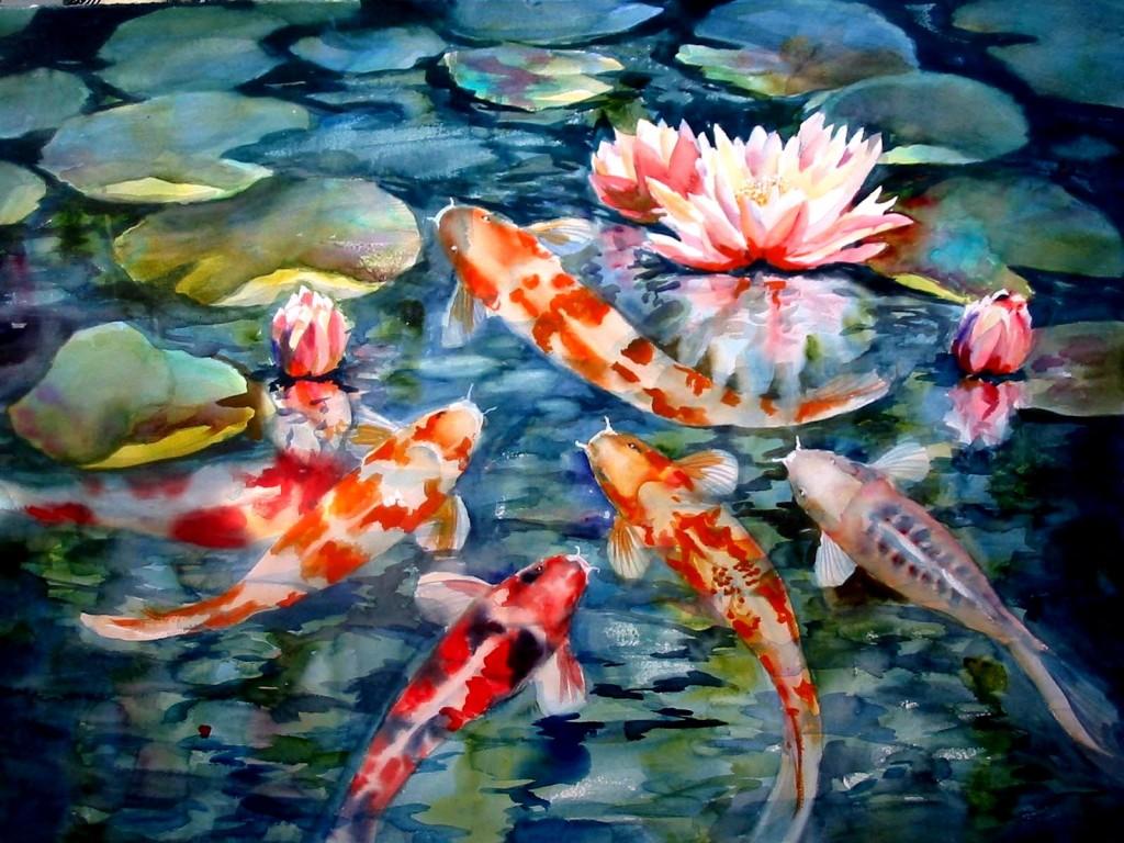 Beautiful Koi Fish - Beautiful Koi Fish
