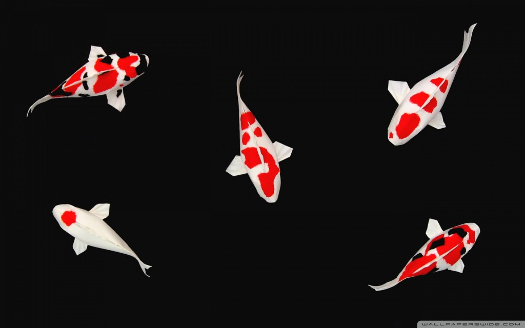 Koi Fish Desktop - Koi Fish Desktop