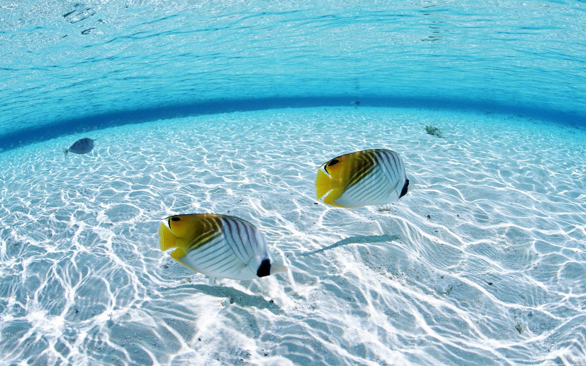 Underwater On The Sea - Underwater On The Sea
