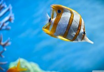 Yellow Fish Widescreen - Yellow Fish Widescreen