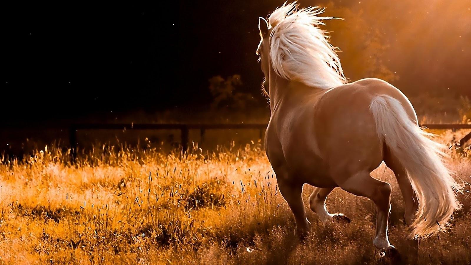 Beautiful Lovely Horse - Beautiful Lovely Horse