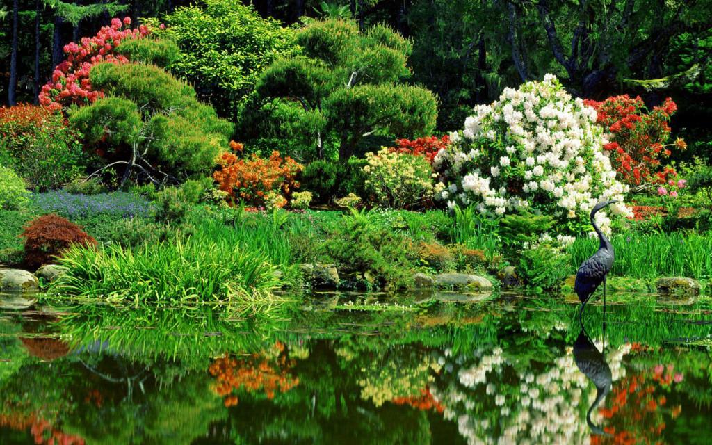 Beautiful Water Garden - Beautiful Water Garden