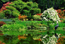 Beautiful Water Garden - Beautiful Water Garden