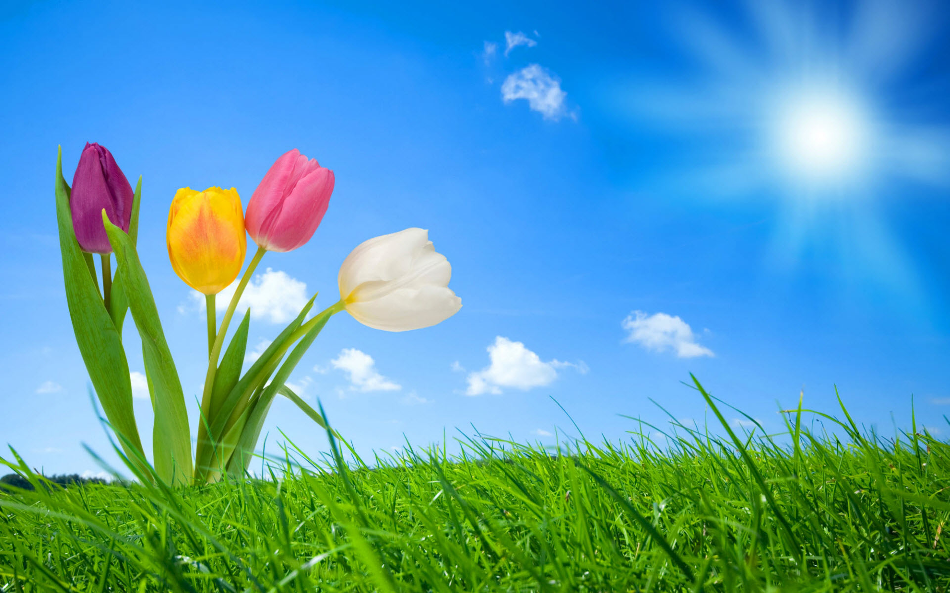 Chic Spring Around - Chic Spring Around