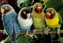 Funny Four Birds Swings - Funny Four Birds Swings