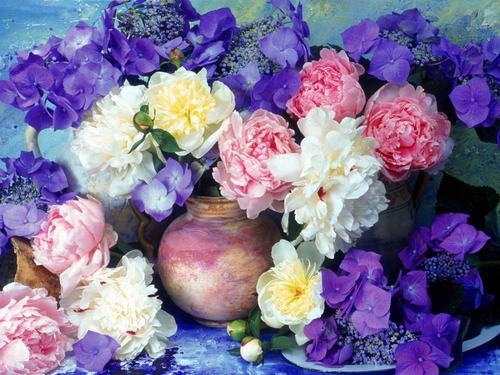Playcolor Peony Blooms - Playcolor Peony Blooms