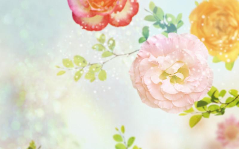 Rainbow Carnations - Rainbow Carnations