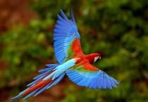 Rainbow Feather Birds - Rainbow Feather Birds