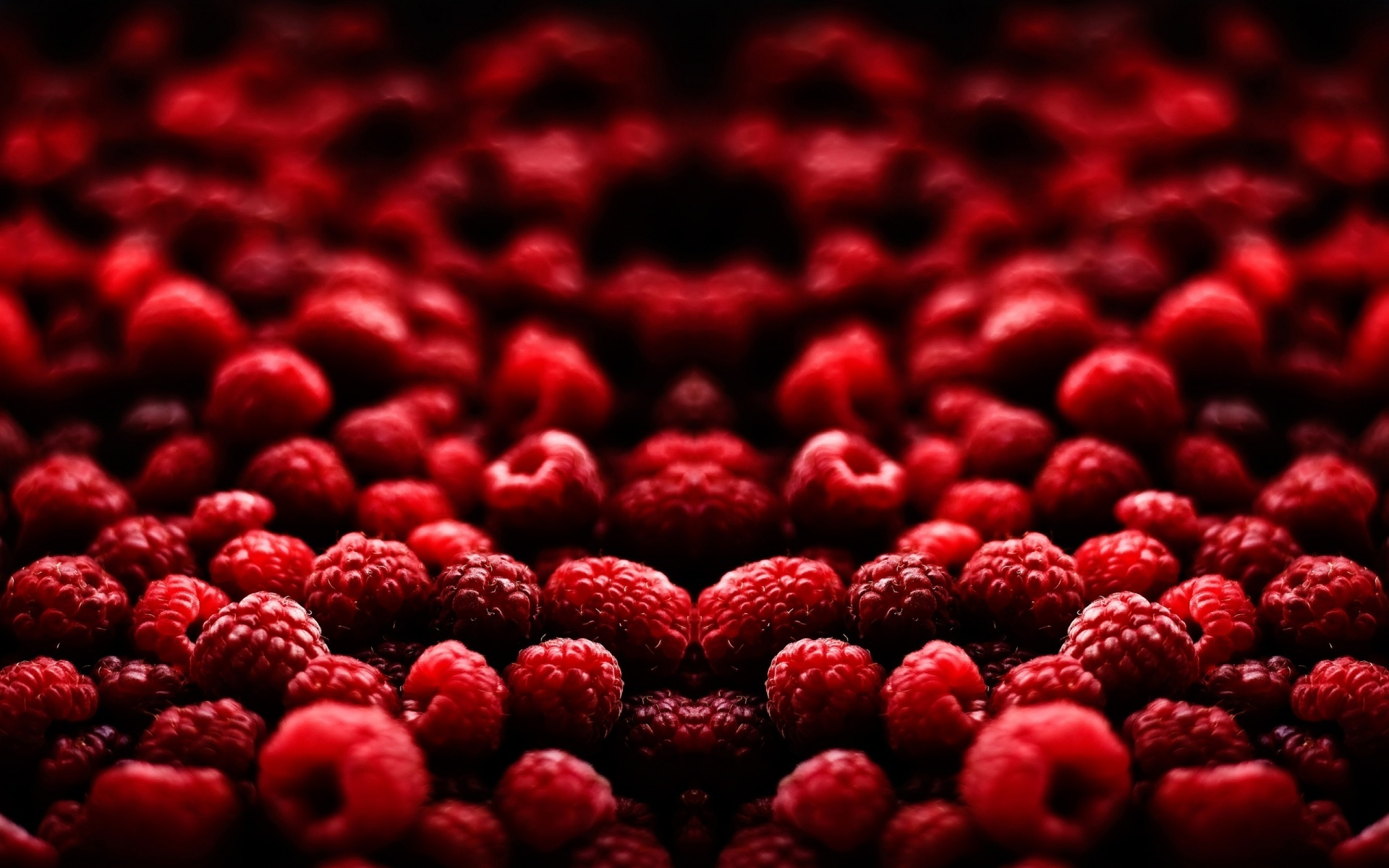 Red Berries Photos - Red Berries Photos
