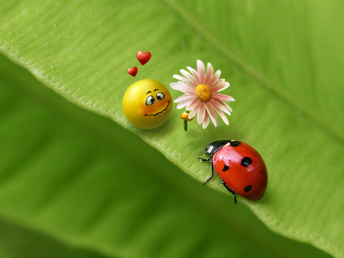 Seed Bugs Of Love - Seed Bugs Of Love