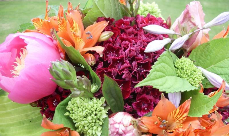 Tropical Kinds Flowers - Tropical Kinds Flowers