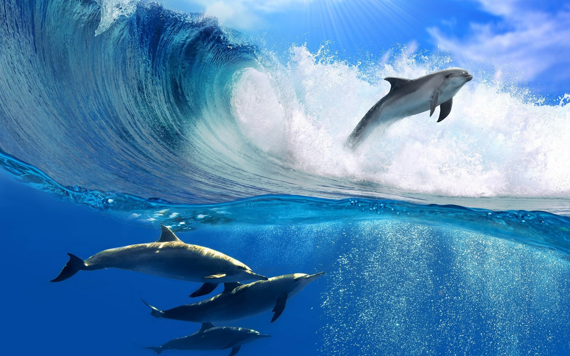 Dolphin Jumping Through Wave